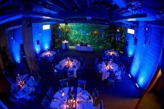 Wedding-+Coral+Reef+Blue.jpg